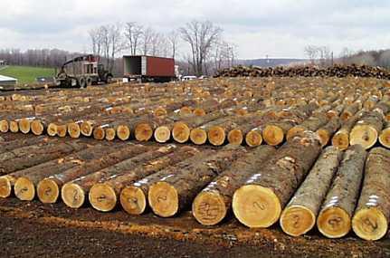 KKW Holzagentur OHG 3 Logs